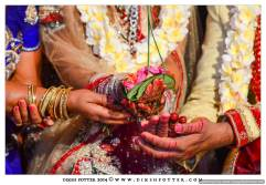 Mauritius-Indian-Wedding-Services-Photography-Videography-Diksh-Potter-Nishta & Sunil (90)